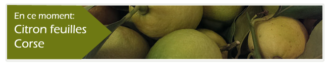 banner citron small